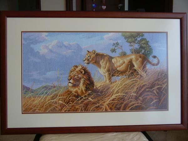 """Африканские львы, """""""